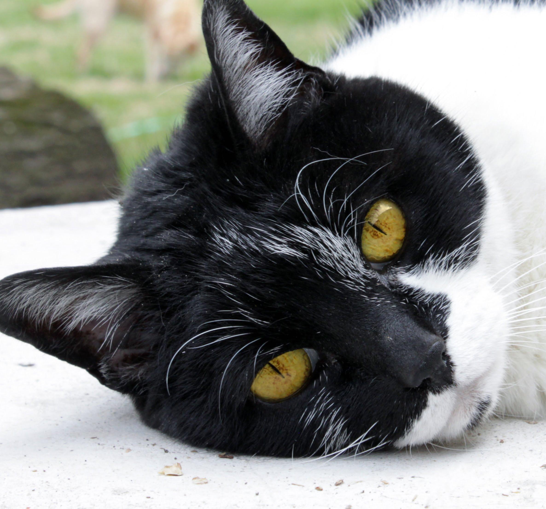 Försäkra en äldre katt