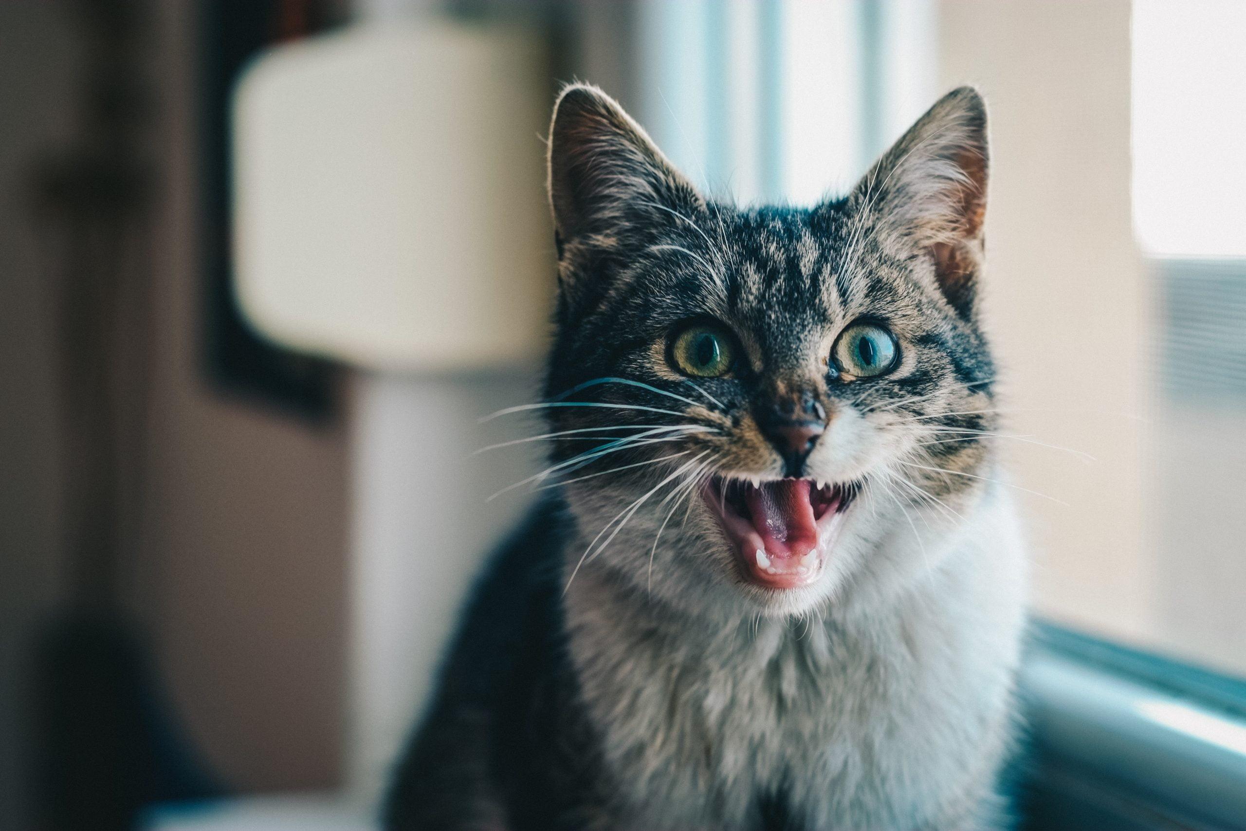 Tandvård – Ingår det för kattförsäkringar?
