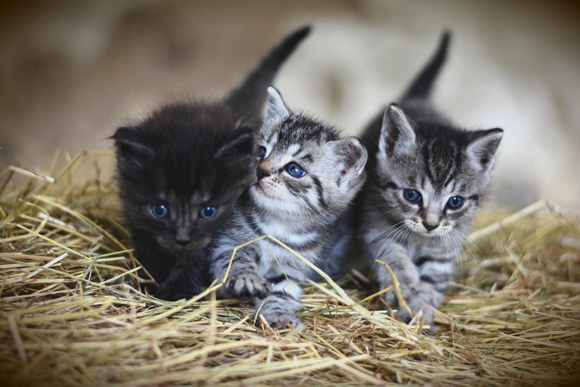 Jämför kattförsäkringar