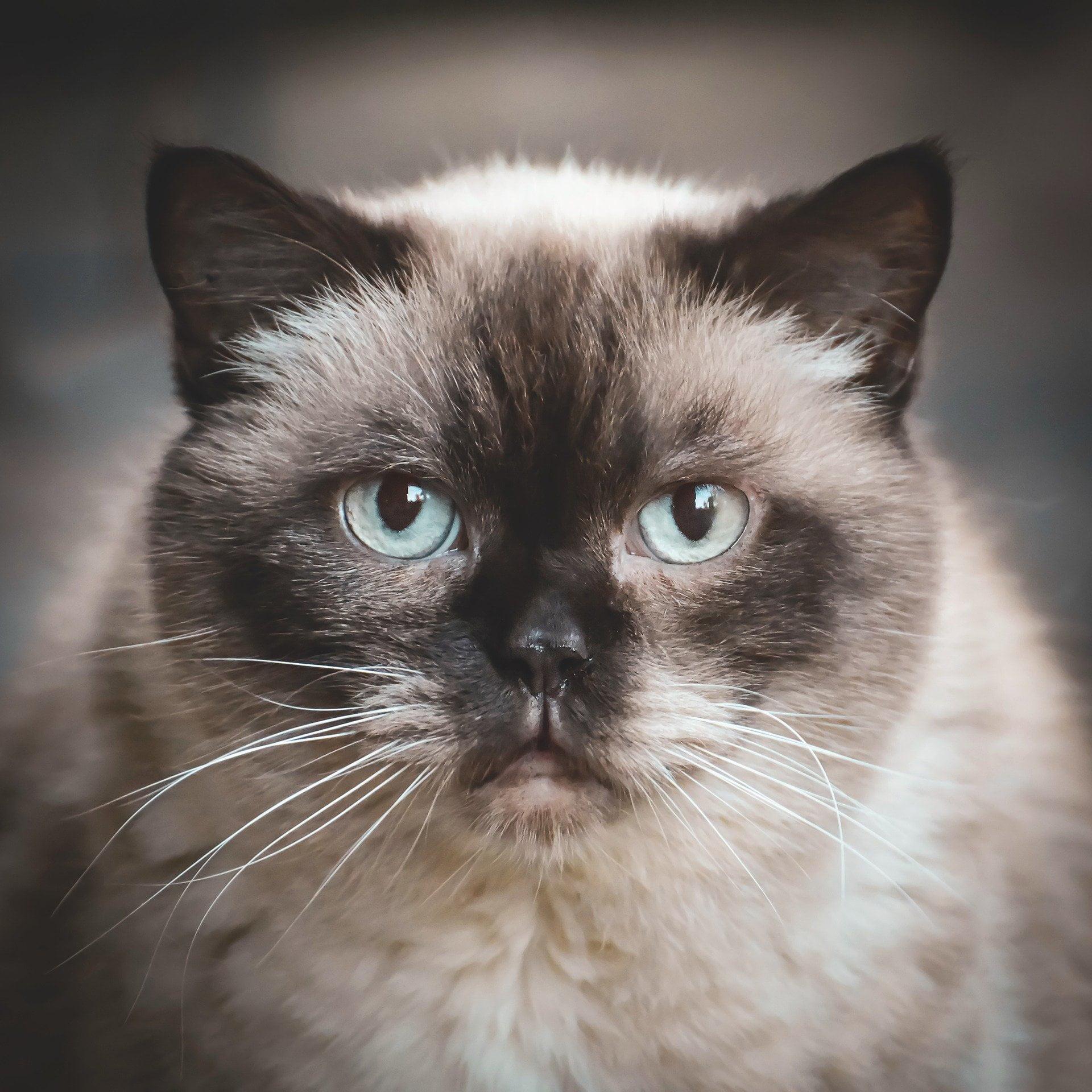 Om kattförsäkringar.com - Jämför kattförsäkringar