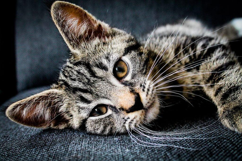 Ingår medicin i kattförsäkringar?
