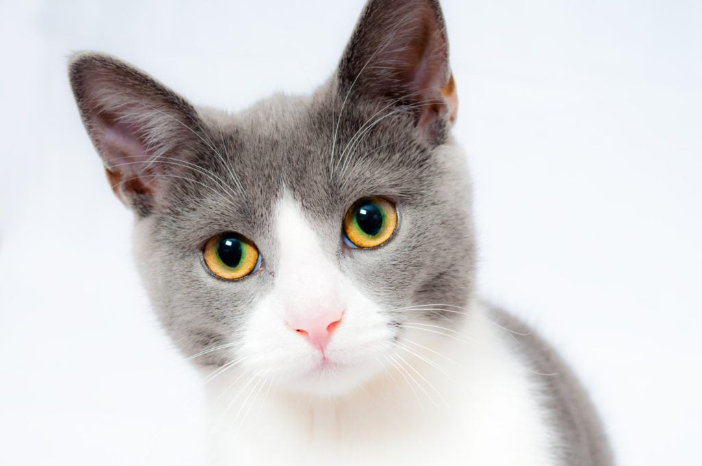 Så fungerar självrisk för kattförsäkringar