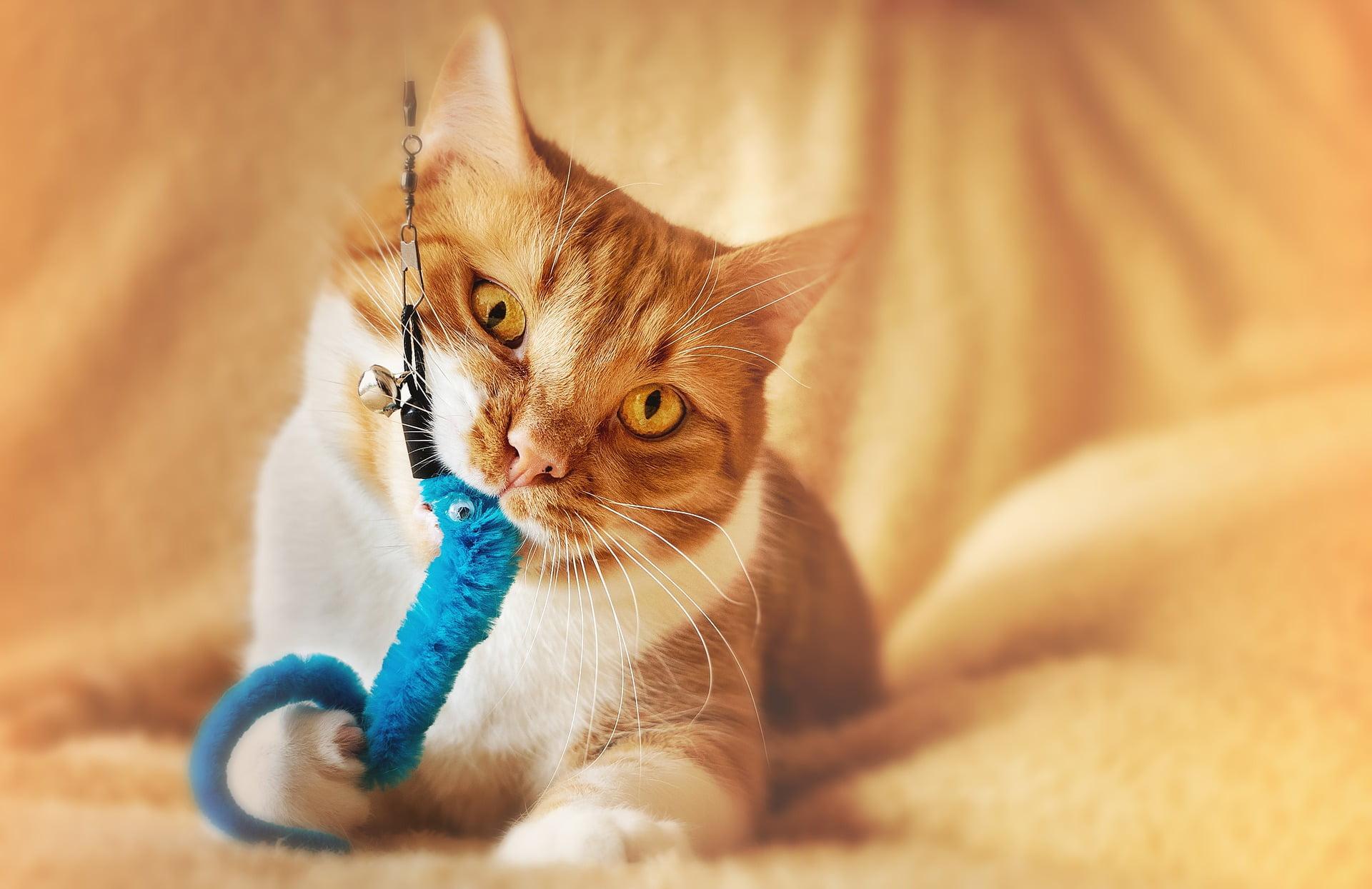 9 kattleksaker som får din katt att gå bananas 2020