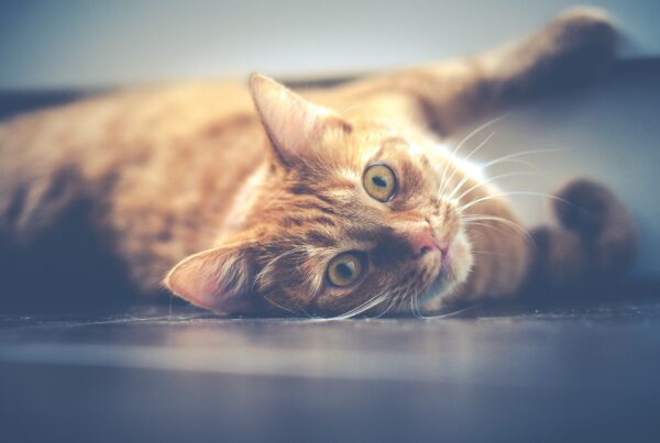Bäst kattförsäkring 2020