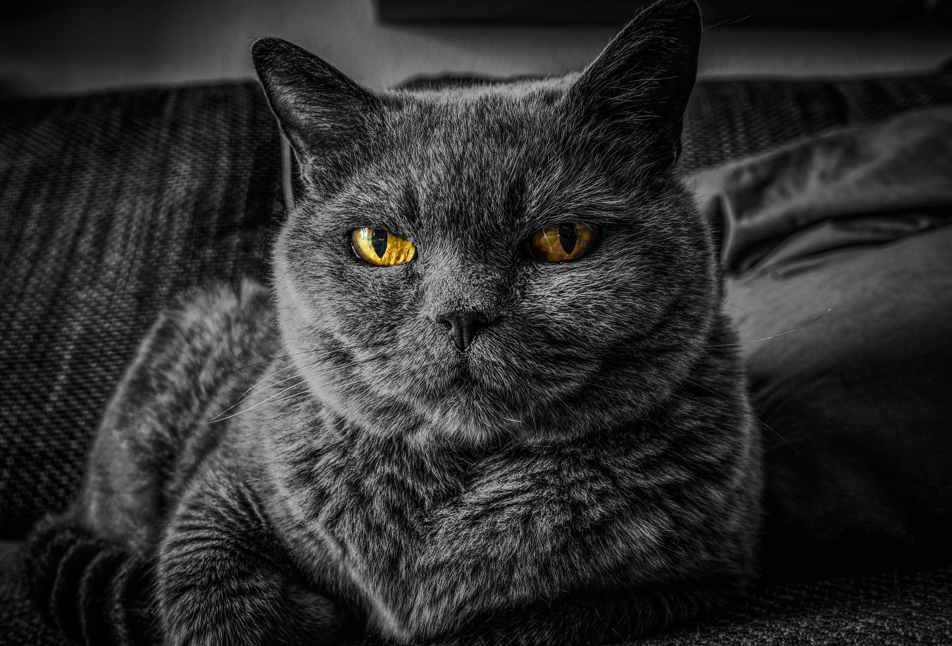 Försäkra vuxen katt eller äldre katt utan tidigare kattförsäkring